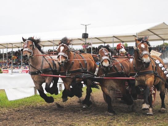 Bozza di Cavalli da Tiro a Brück